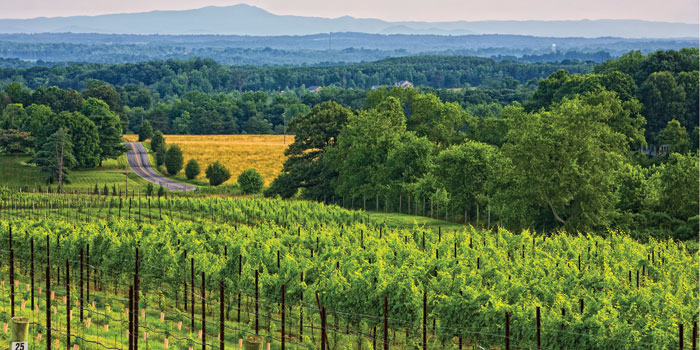 raffaldini-vineyards-in-yadkin-valley.jp